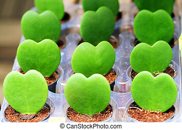 Plants in the form of heart