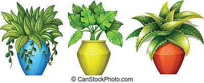 Plants in the pot