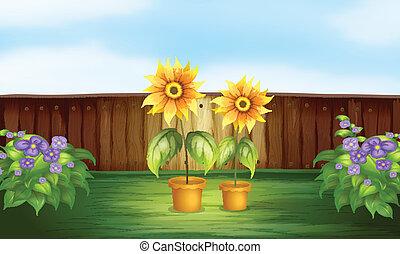 Plants inside a fence