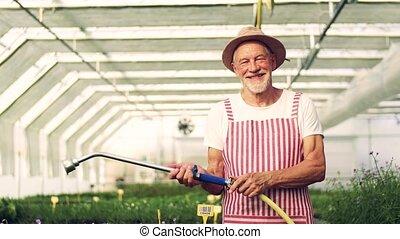 plants., jardinage, arrosage, devant, serre, personne âgée homme, vue