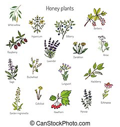 Plants - nectar sources for honey bees. Vector set