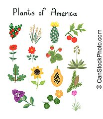 Plants of America vector set