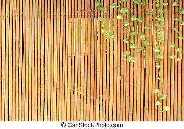 Plants on a bamboo wall
