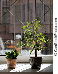 Plants on a window sill in a sunny day