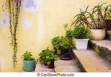 Plants on Stairway
