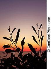 Plants on Sunset