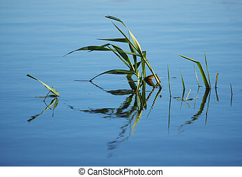 plants on the lake