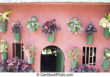 Plants on wall