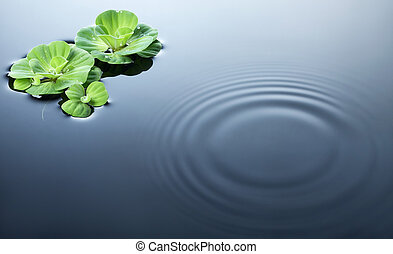 plants on water with ripples - plants and dewdrops on water...