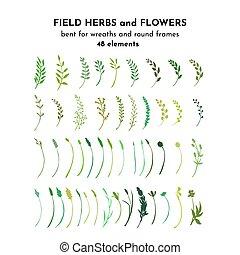 plants., sauvage, brindilles, branches, illustrayion, botanique, drawing., vecteur, pré, bundle., herbes, champ, fleurs, isolé