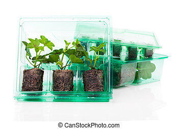 Plants, seedlings for transportation in plastic box, on white background