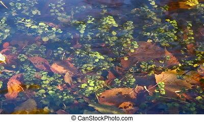 Plants under water