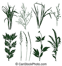 plants - silhouettes of decorative elements of grass and...