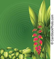 Plants with elliptic leaves