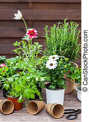 Plants with flowers and herbs in garden