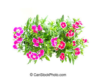 plants with flowers isolated on white background