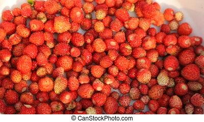 plaque, sauvage, closeup, fraises
