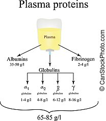 Plasma proteins. Albumin. Fibrinogen. Globulin....