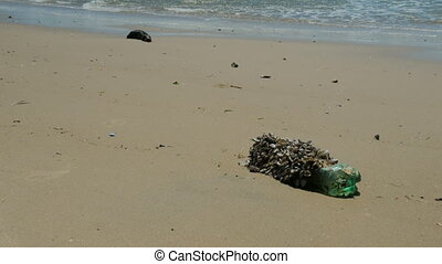 Plastic bottle full of small sea animals on a beach