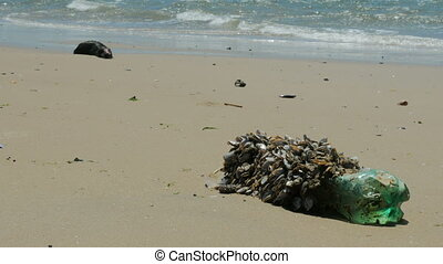 Plastic bottle full of small sea organisms on a beach, with...