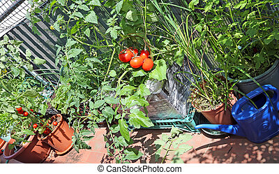 plastic box in terrace with red tomatoes - plastic box in...