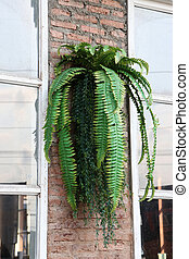 Plastic bracken fern decorate on the brick wall.