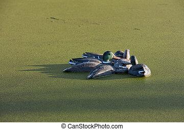 Plastic Decoy Ducks