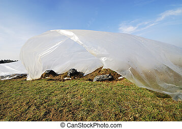 Plastic Foil - Field for growing vegetables covered by a...