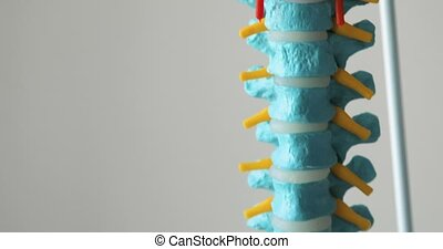 Plastic model of a human spine on white background.