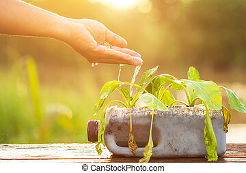 Hand of people giving water to vegetable in plastic bottle on wooden table with sunlight in morning time