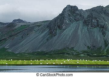 plastica, silaggio, islanda, bianco, erba, lago, collina, verde, balle fieno
