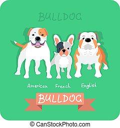 plat, 3, vastgesteld ontwerp, bulldogs