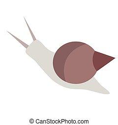 plat, blanc, escargot, illustration