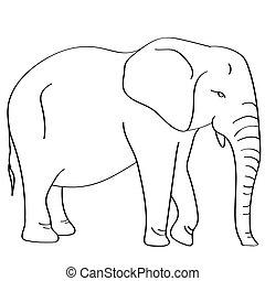 plat, blanc, illustration, éléphant