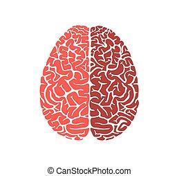 plat, cerveau, forme, conception, humain, education, icône