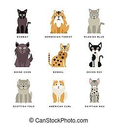 plat, conjugal, espèces, de, chats