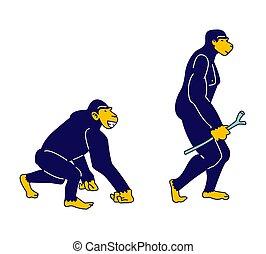 plat, crosse, anthropologie, main, évoluer, droit, primat,...