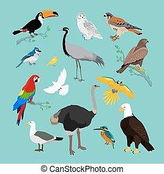plat, divers, conception, oiseaux, collection