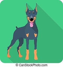 plat, doberman, dog, vector, ontwerp, pinscher, pictogram