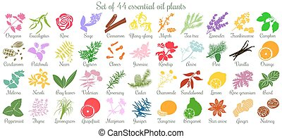 plat, ensemble, coloré, grand, 44, huile, plants., essentiel...