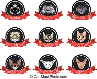plat, ensemble, icônes, pedigreed, chats, noms