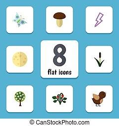 plat, ensemble, moineau, elements., bio, arbre, moth, inclut, aussi, vecteur, icône, objects., lune, autre, lunaire, champignon