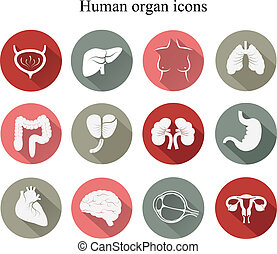 plat, ensemble, vector., icons., humain, organes