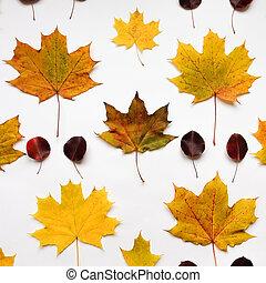 plat, modèle, feuilles, sommet, automne, fond, clair, au-dessus, vue, blanc, poser, vue