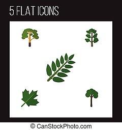 plat, pictogram, ecologie, set, van, oaken, acacia, blad,...