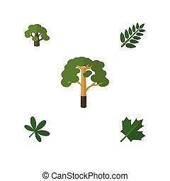 plat, pictogram, natuur, set, van, esdoorn, acacia, blad,...