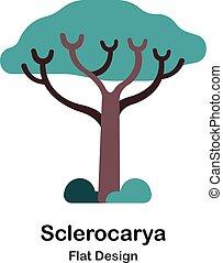 plat, sclerocarya, icône