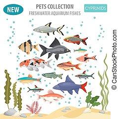 plat, style, ensemble, cyprinids, isolé, aquarium, white., poissons, icône, eau douce, espèces