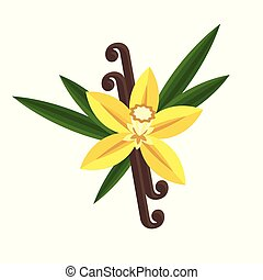 plat, vanille, fleur, illustration