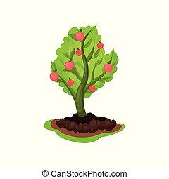 plat, vector, natuurlijke , rijp, poster, boompje, jonge, theme., rood, infographic, groen landschap, landbouw, tuinieren, leaves., of, element., appeltjes